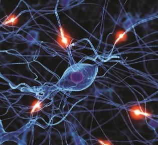 Соматический отдел нервной системы
