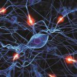Соматическая нервная система человека