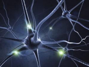 Вегетативный отдел нервной системы человека
