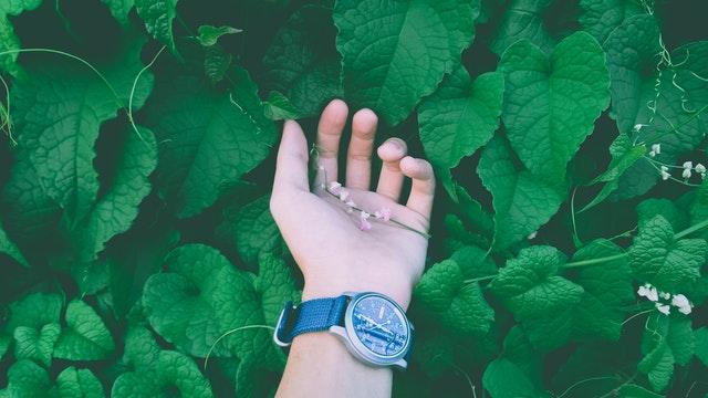 травяные сборы